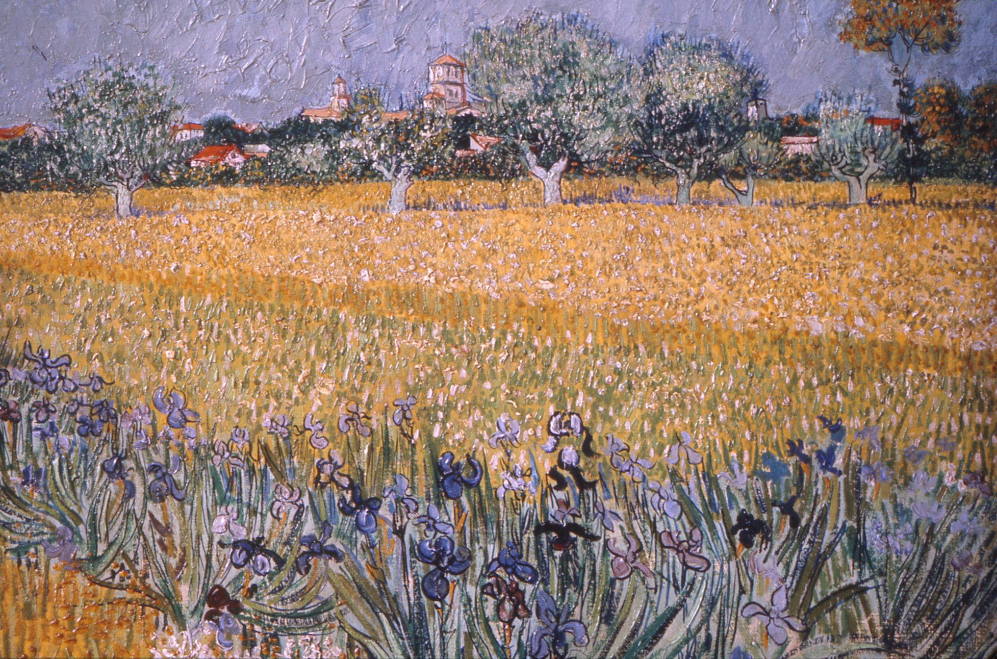 Field With Flowers ...